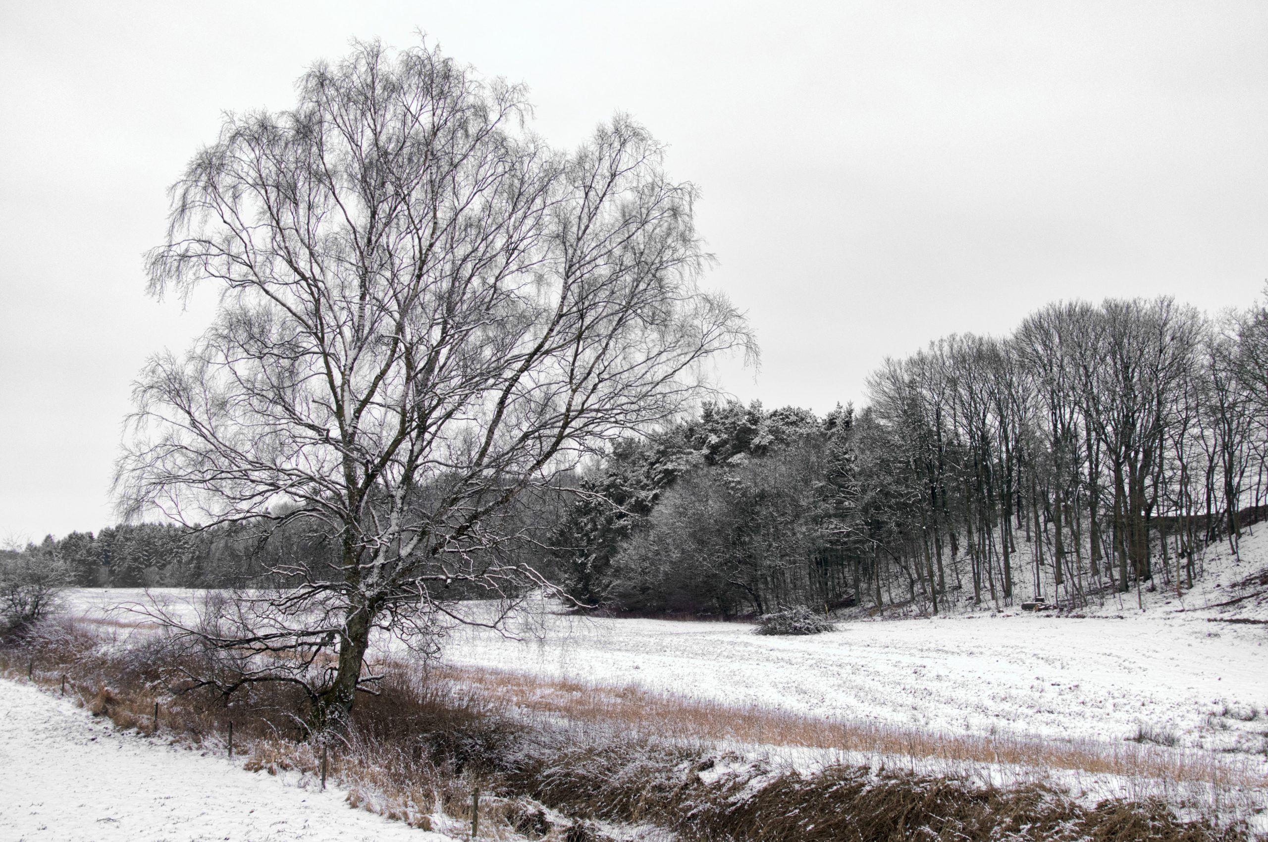 Vintertræ, Fri leg, Uge 10, 68/365, Carlsberg Bækken, Randers