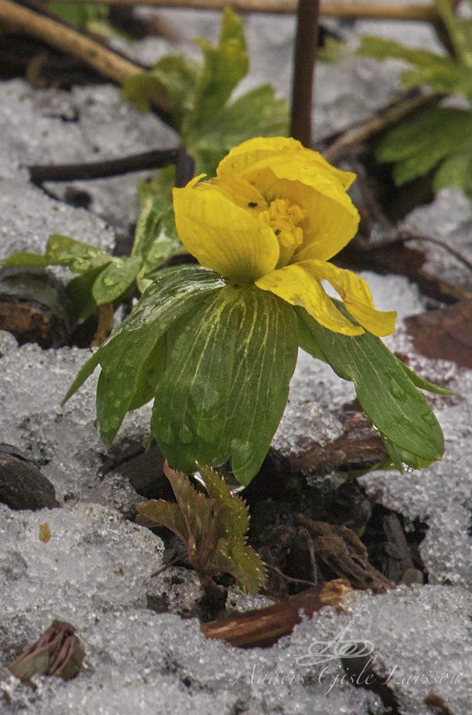 Foråret lister sig frem derude, Fri leg, Uge 10, 70/365, Assentoft, Randers