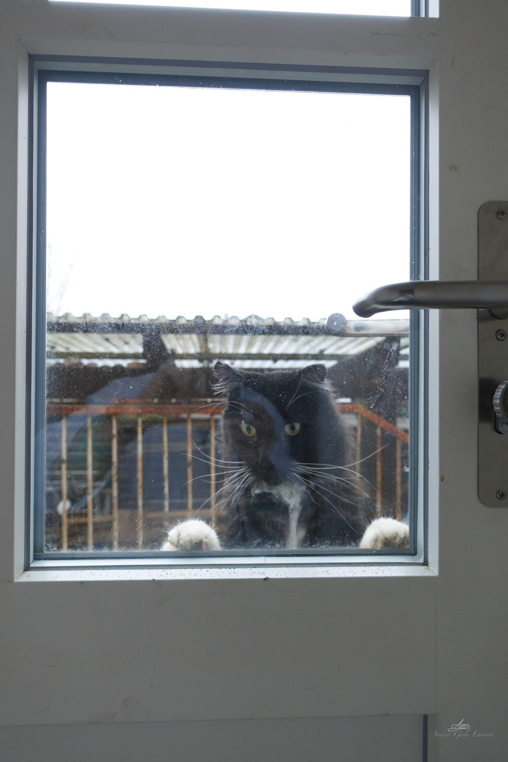 Cat VIEW, Første billede + 100% manuel + ingen redigering, Uge 12, 81/365, Assentoft, Randers