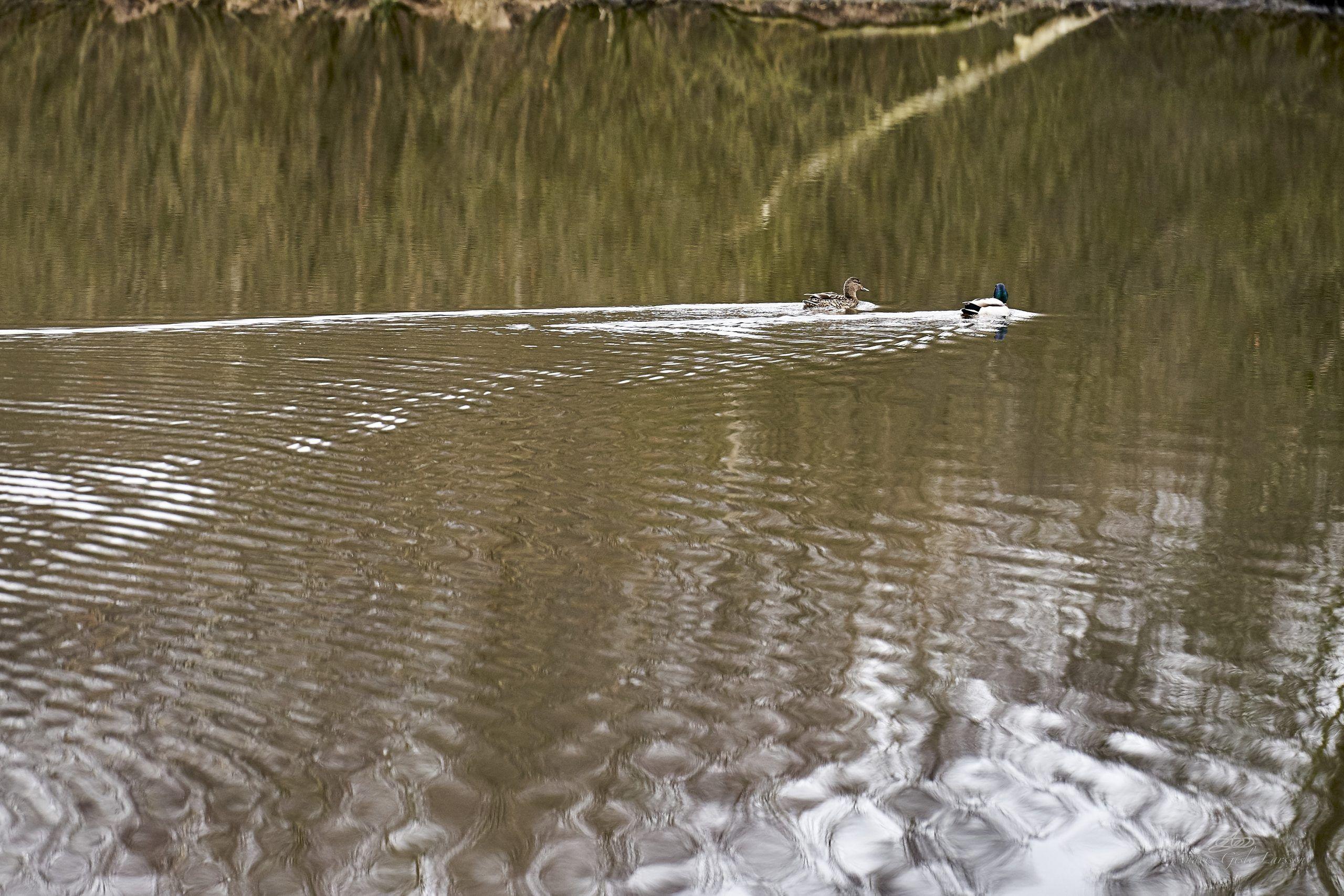 Stille vand, Det Gyldne Snit, Uge 13, 86/365, Paderup, Randers