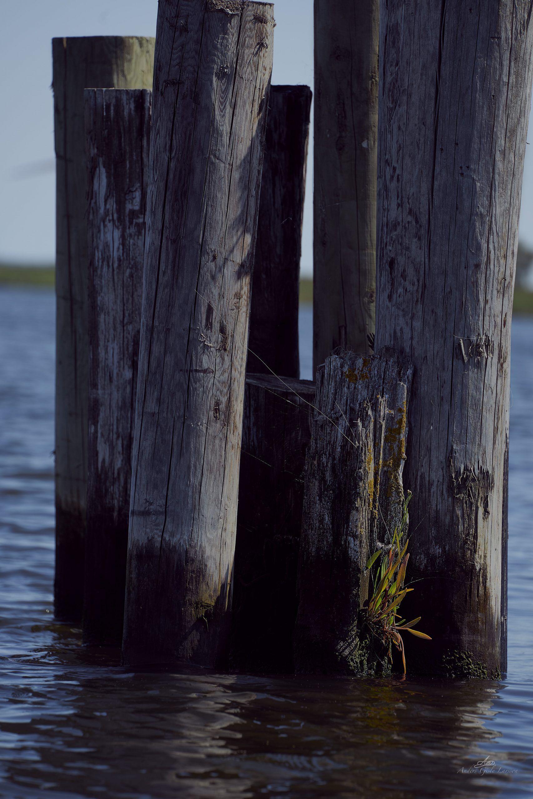 Waterline, 207/365, Uge 30, Randers Fjord, Randers