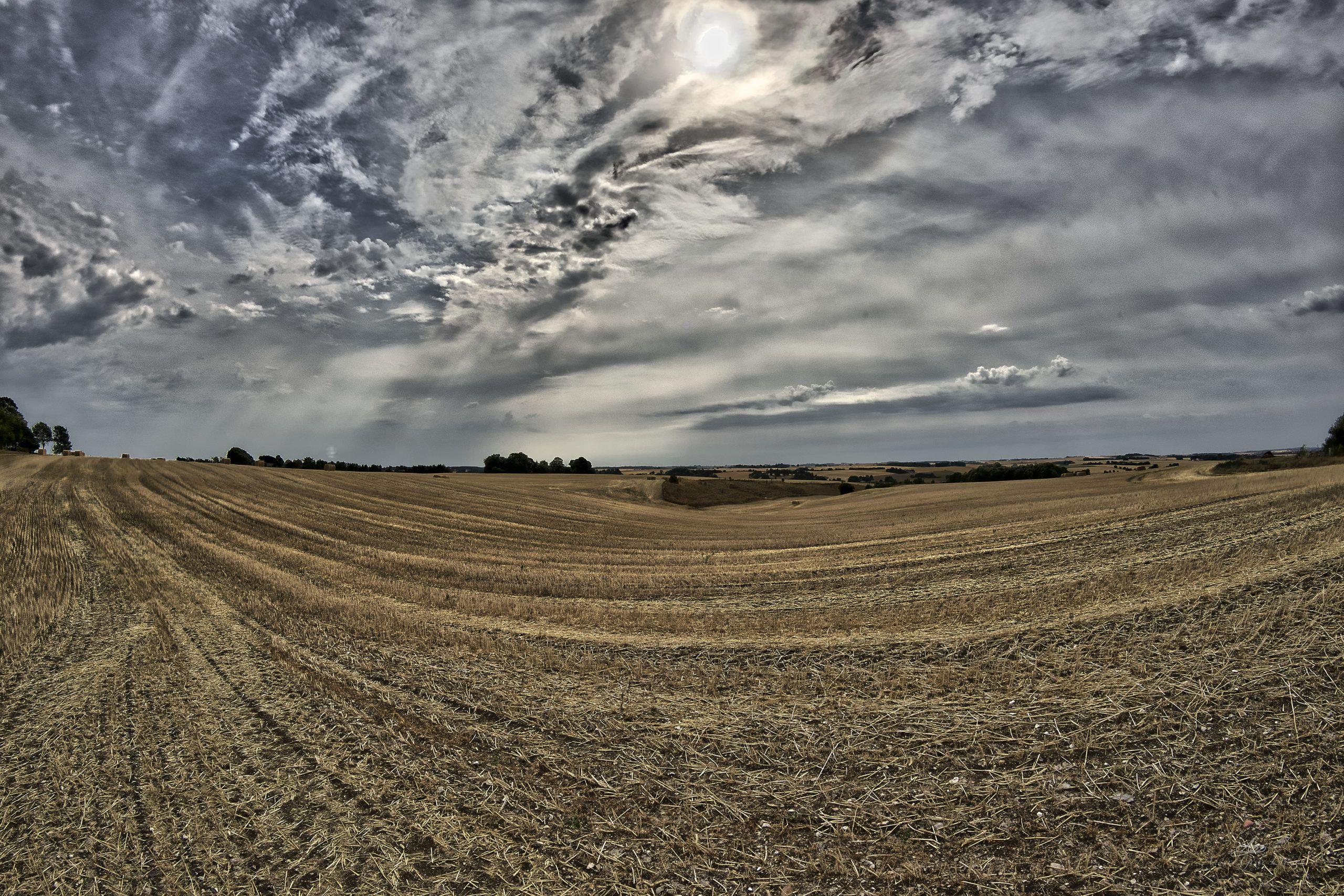 Wheat fields, 212/365, Uge 31, Sønderhede, Lime, Randers- Samyang 12mm/F2.8 Fisheye