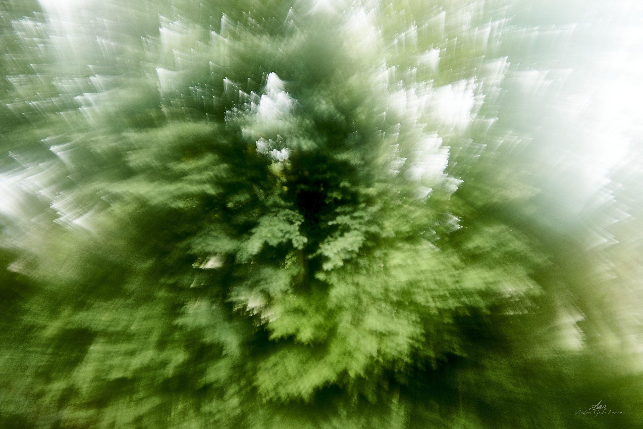 Det eksploderede træ, 242/365, Uge 35, Assentoft, Randers