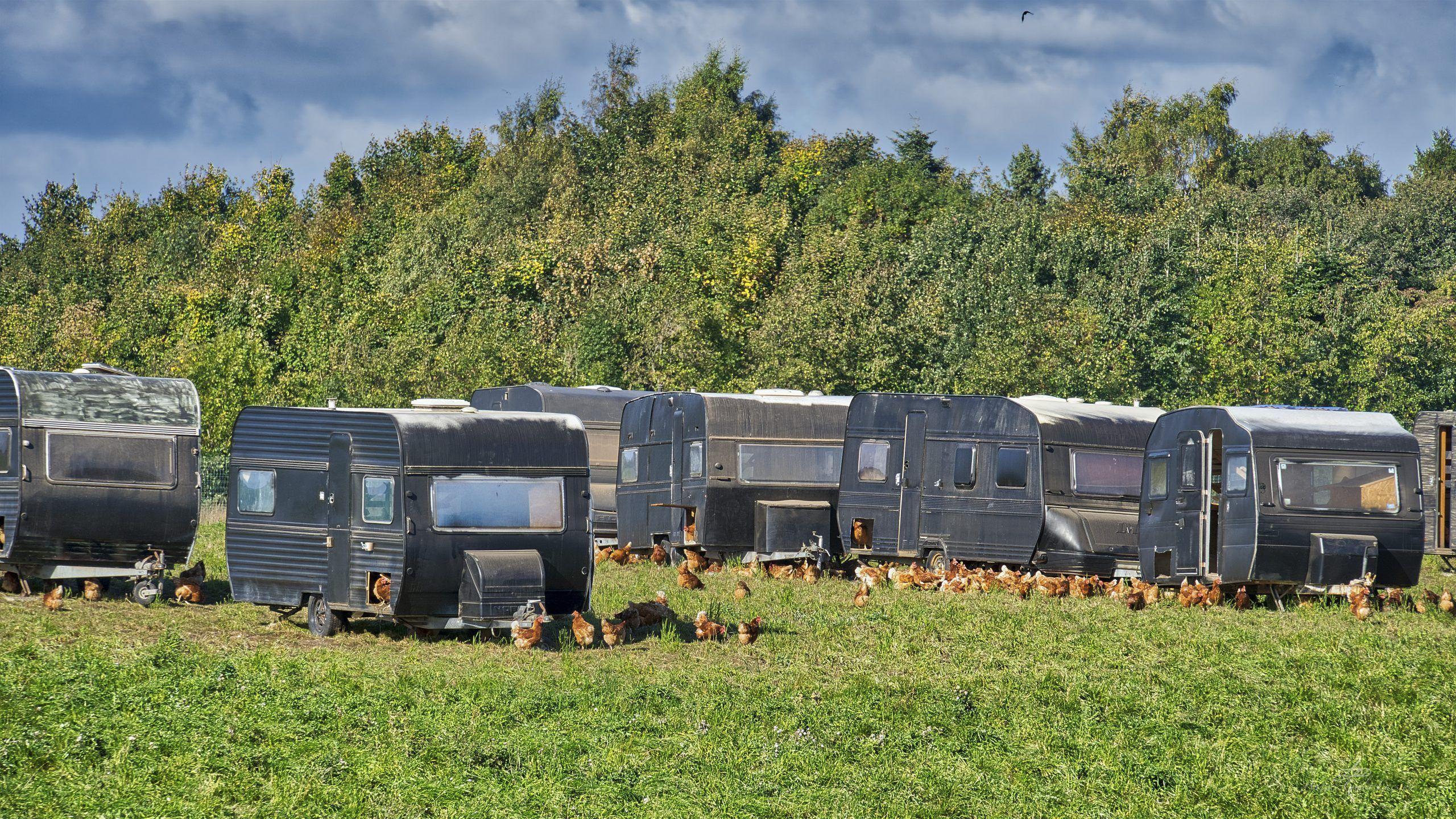 Chicken Camp, 271/365, Uge 39, Kasted, Århus