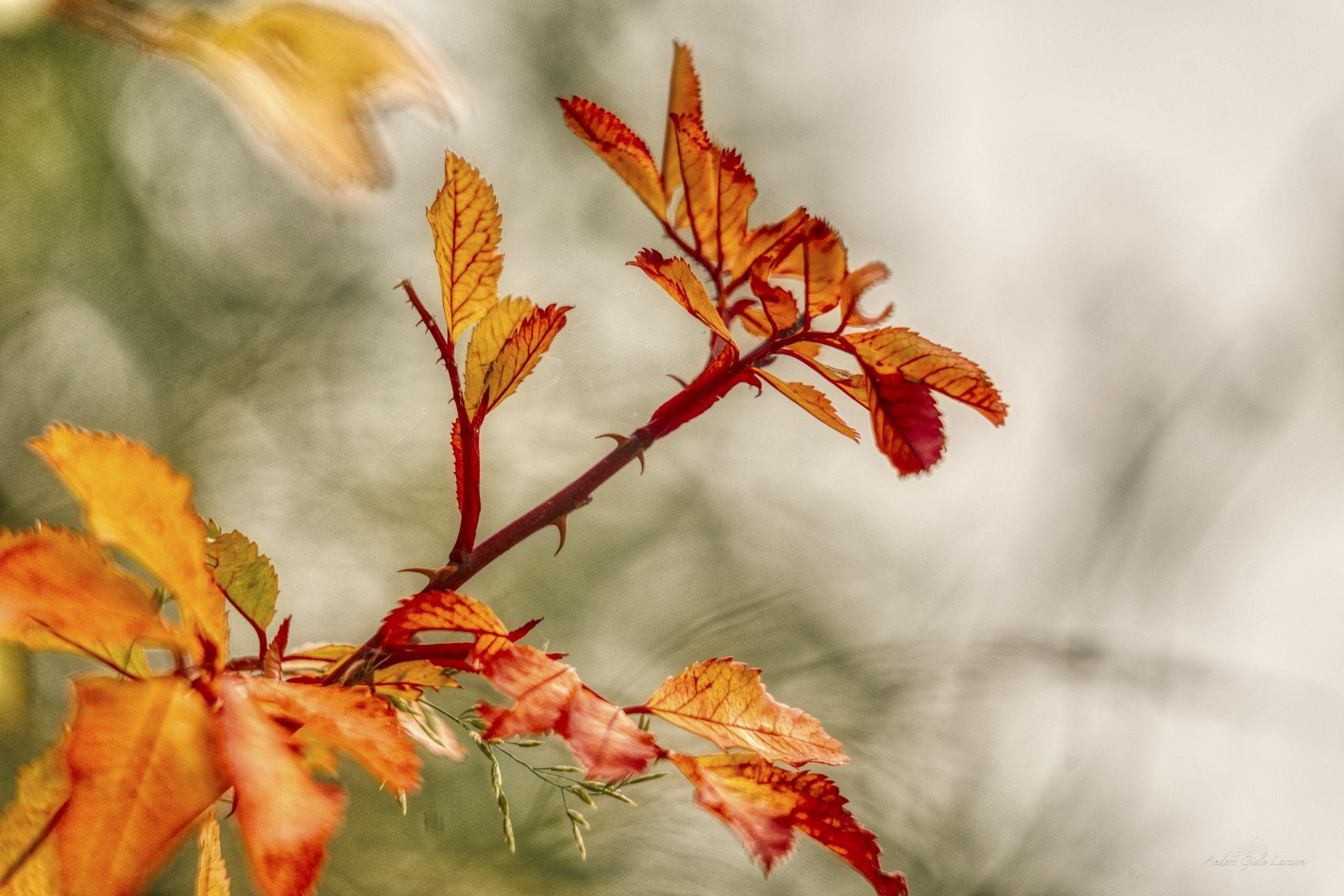 As Autumn, 281/365, Uge 41, Randers
