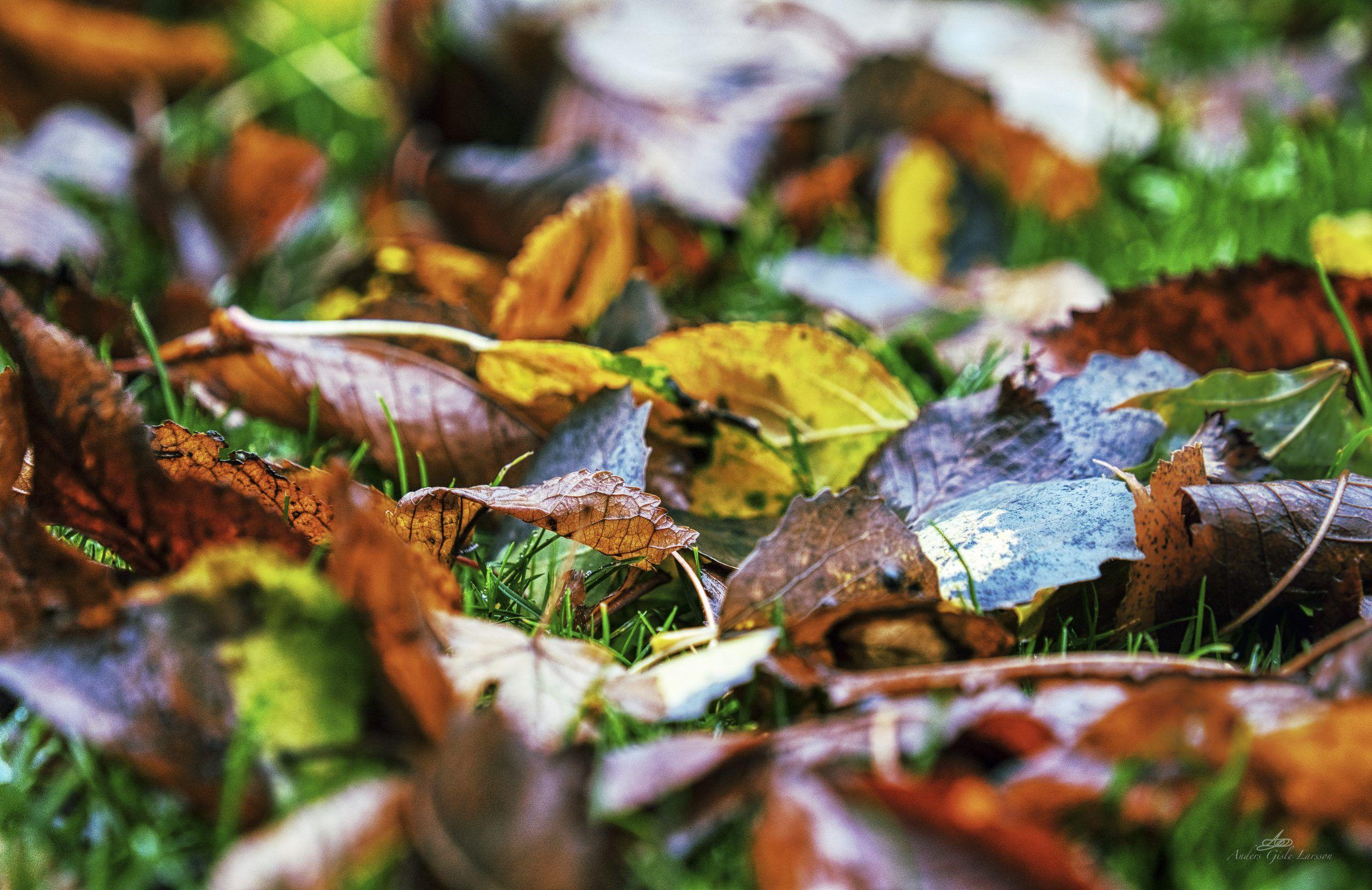 Efterårsfarver, 303/365, Uge 44, Assentoft, Randers