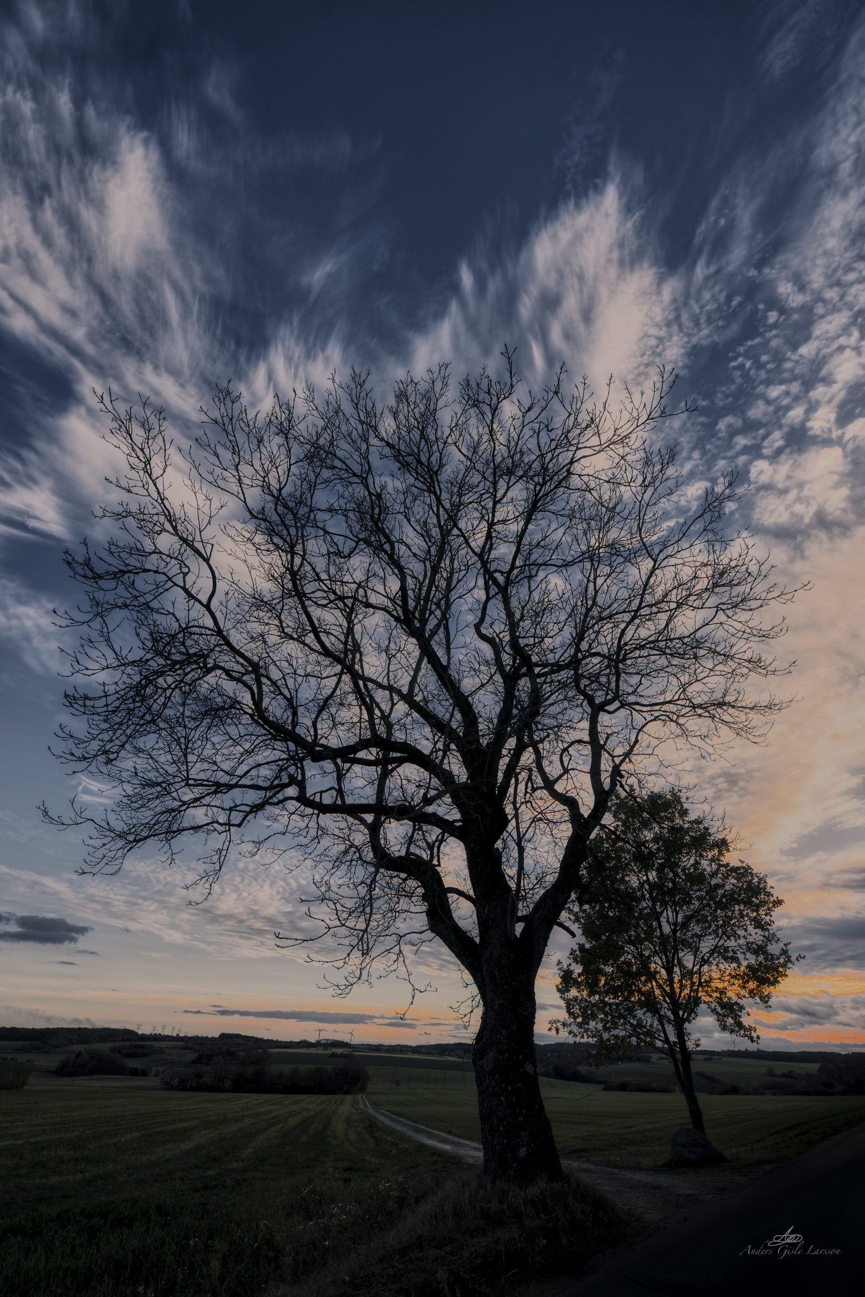 Himmeltræet, 307/365, Uge 44, Tebbestrup, Randers