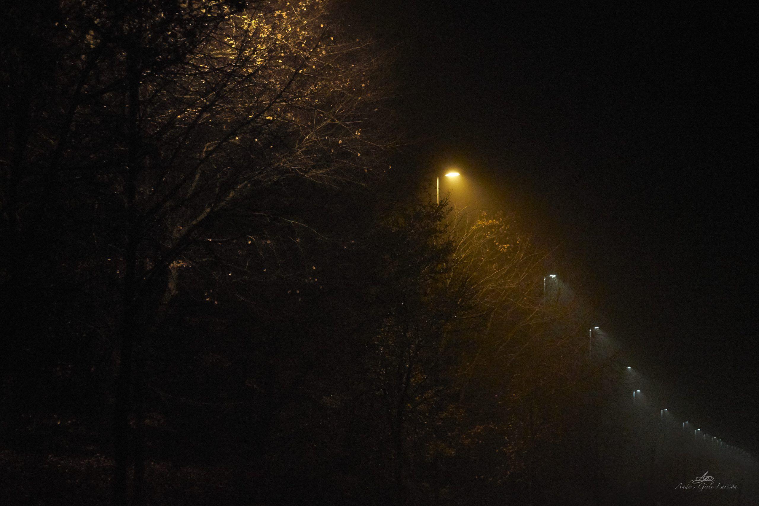 Tåge Lys, 311/365, Uge 45, Assentoft, Randers
