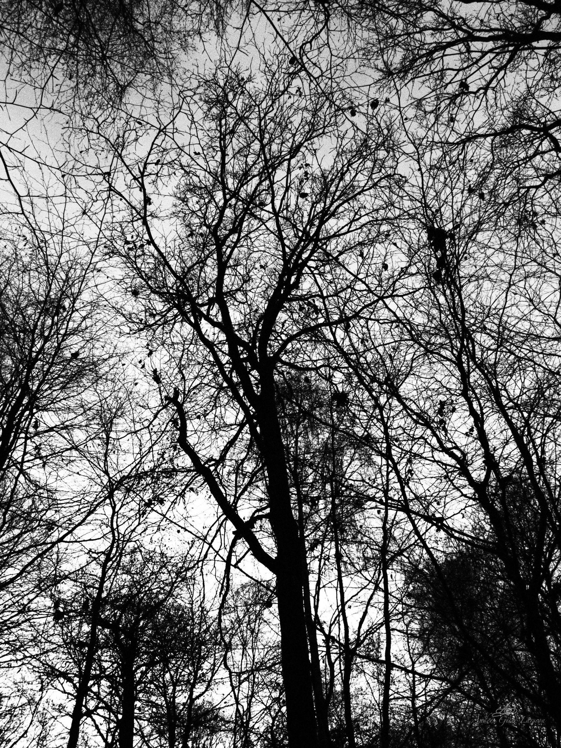 Spøgelses Skoven, 328/365, Uge 47, Assentoft, Randers
