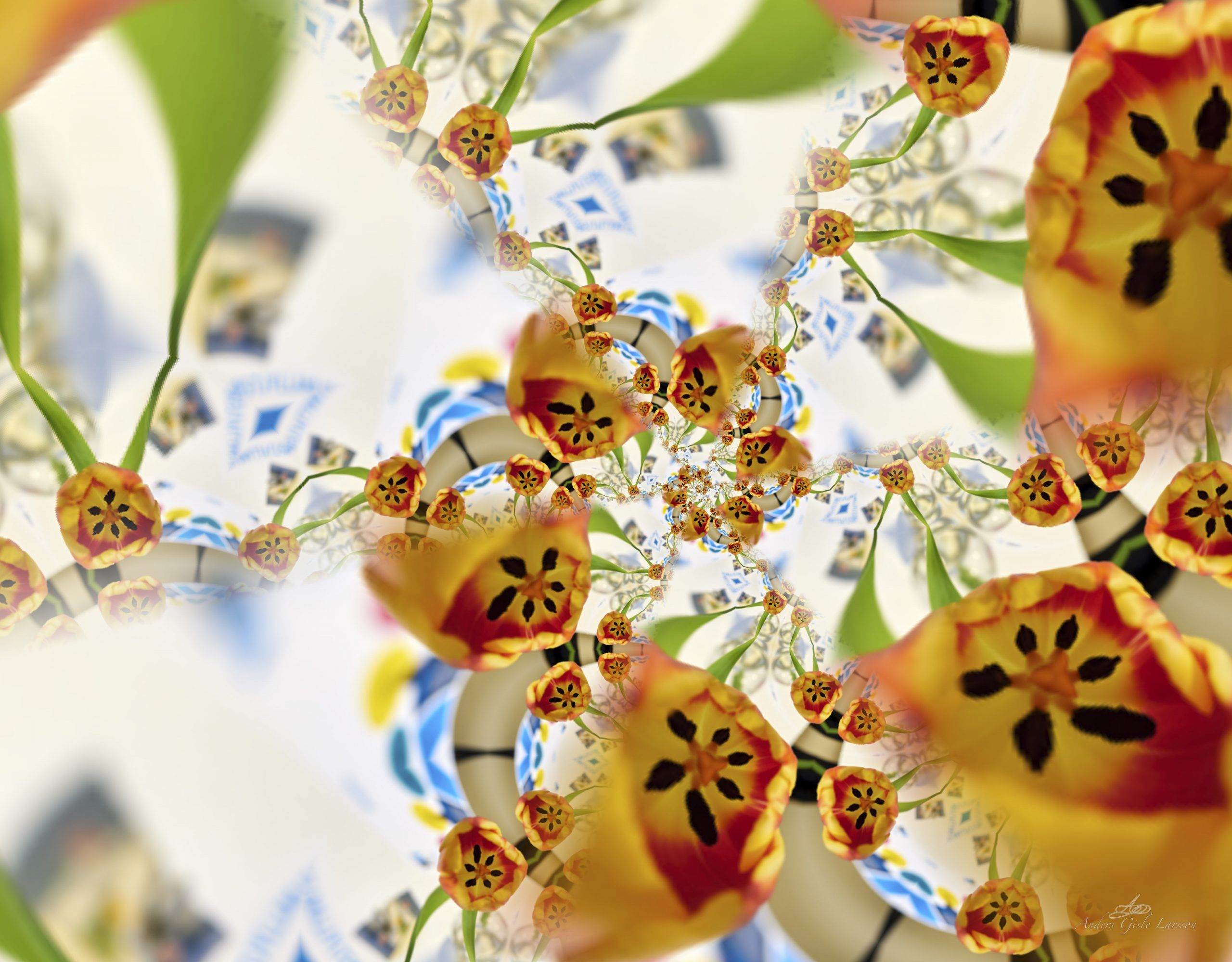 Tulipan Kaleidoskop, Uge 11, Assentoft, Randers