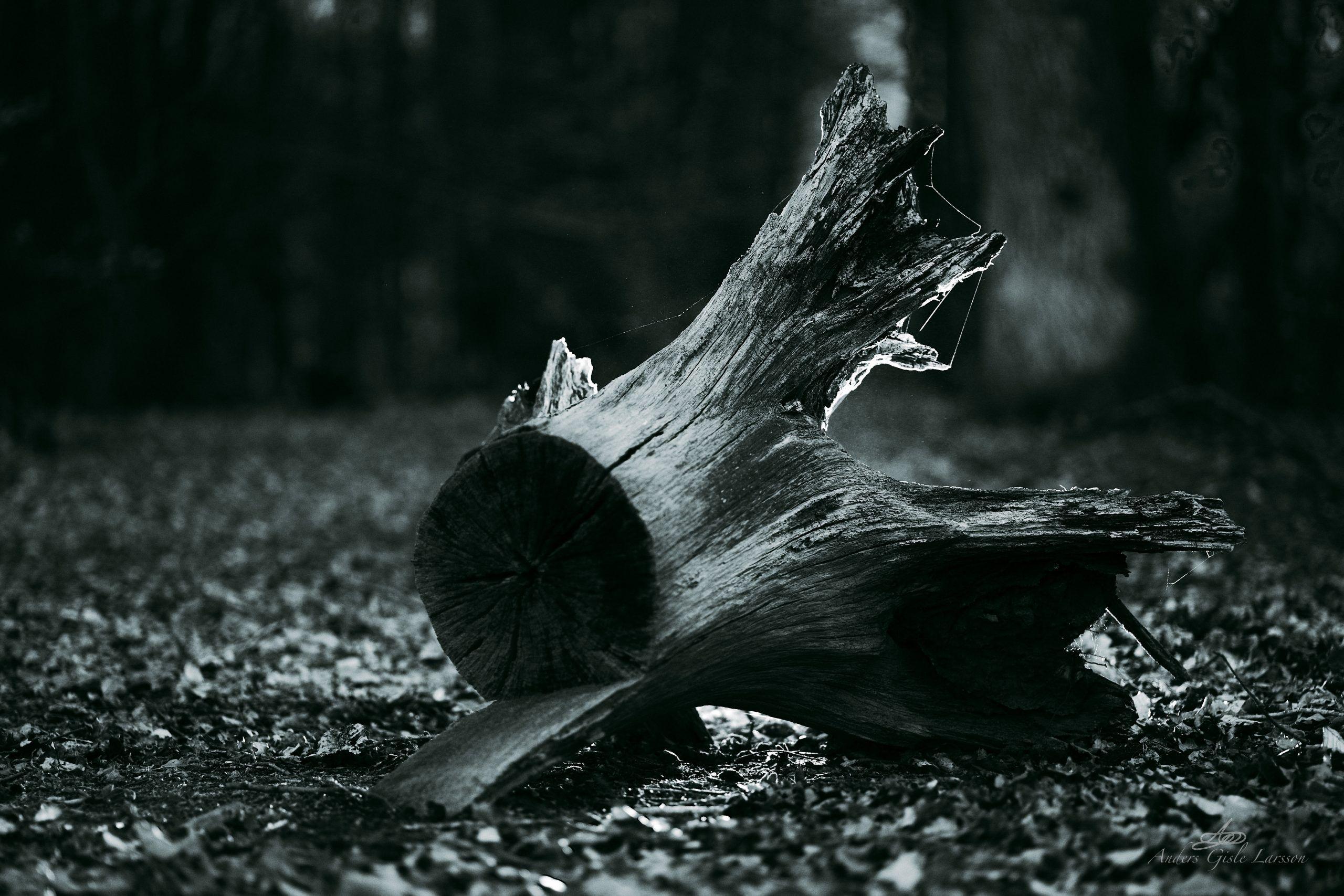 Skovroden