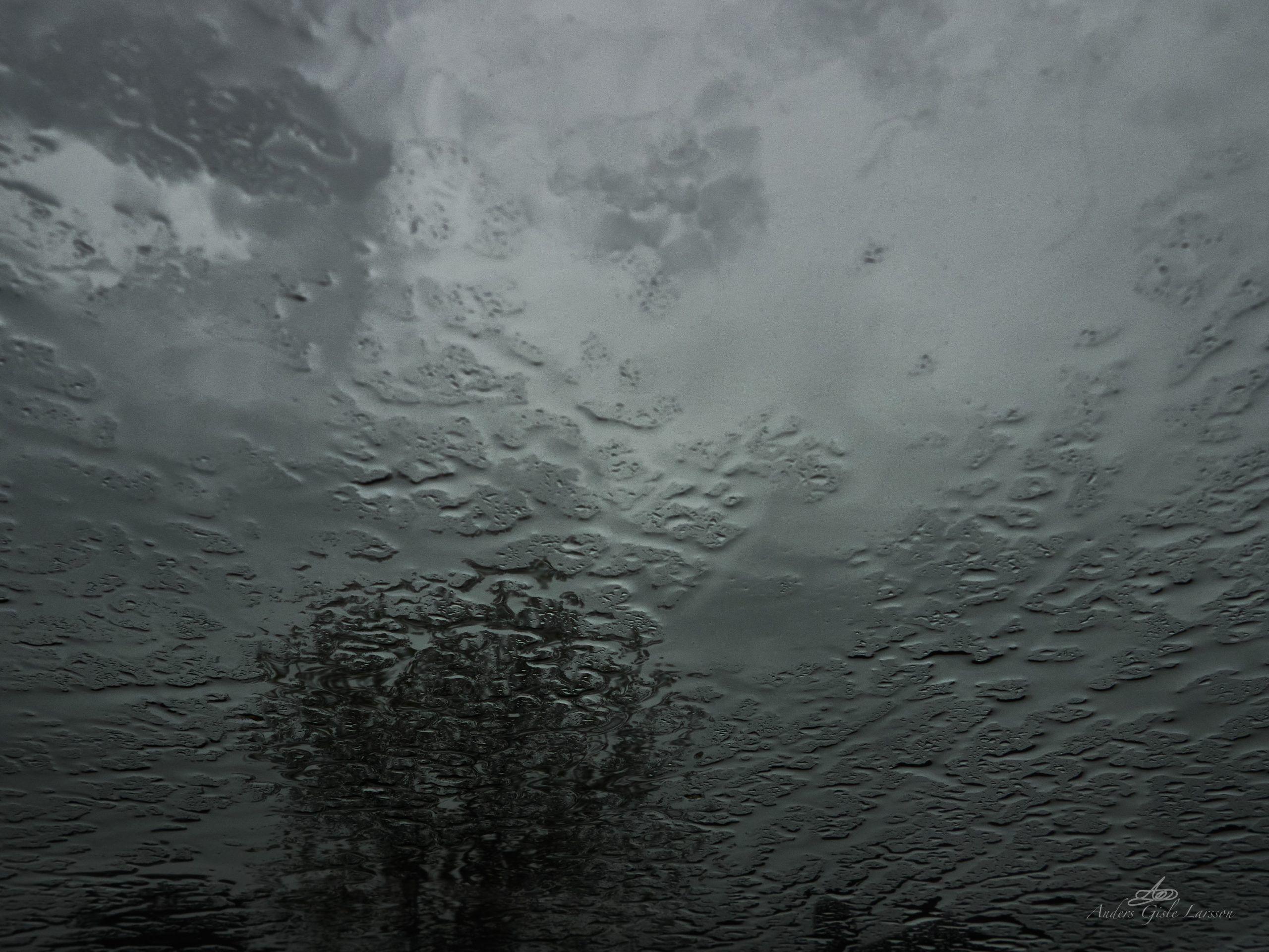 Regnvejrs træet