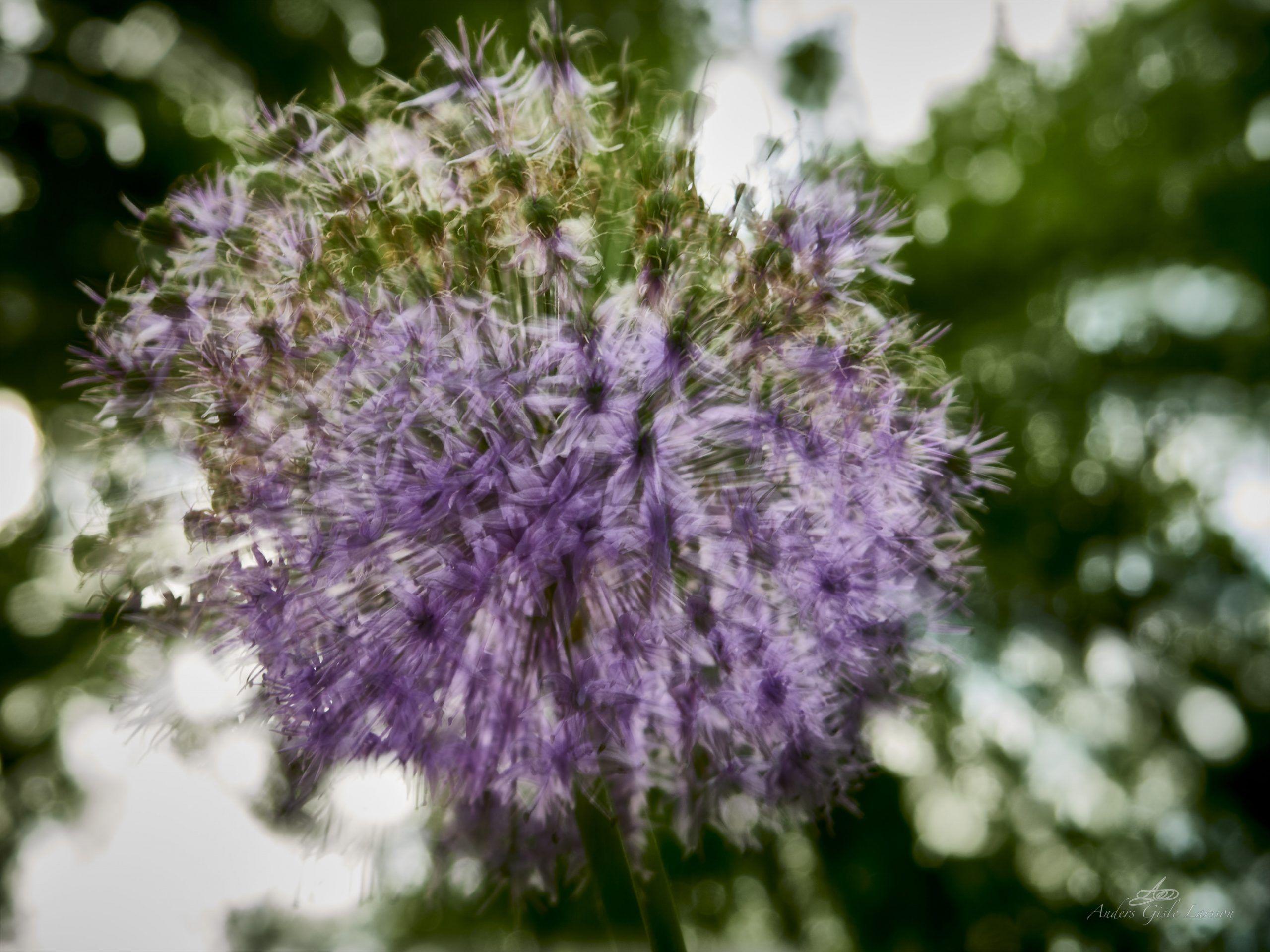 Blomsterskud