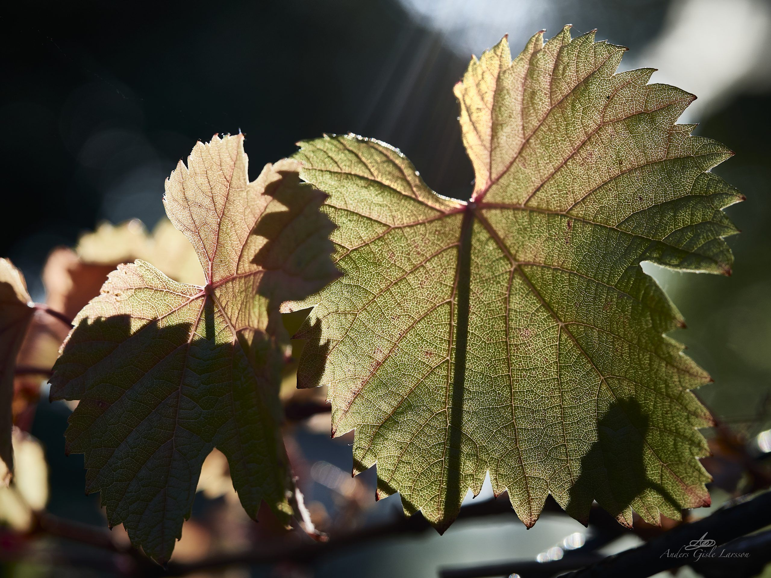 Sol vin
