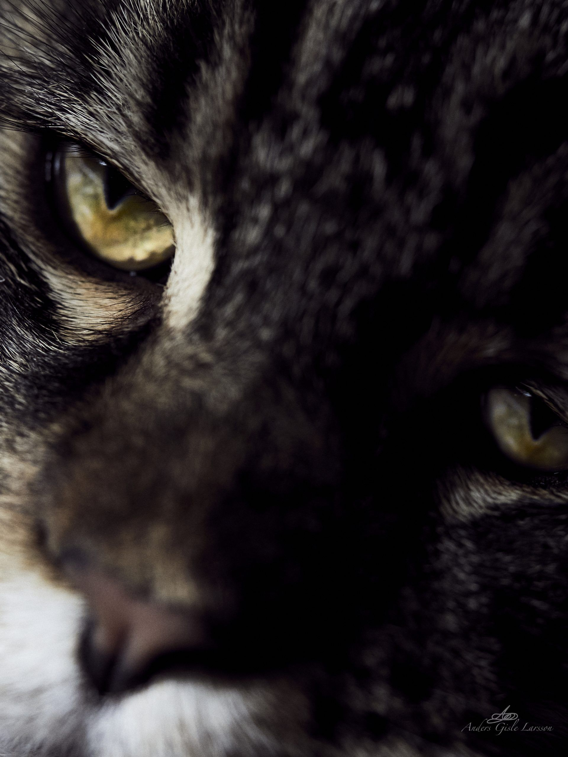 Katteøje