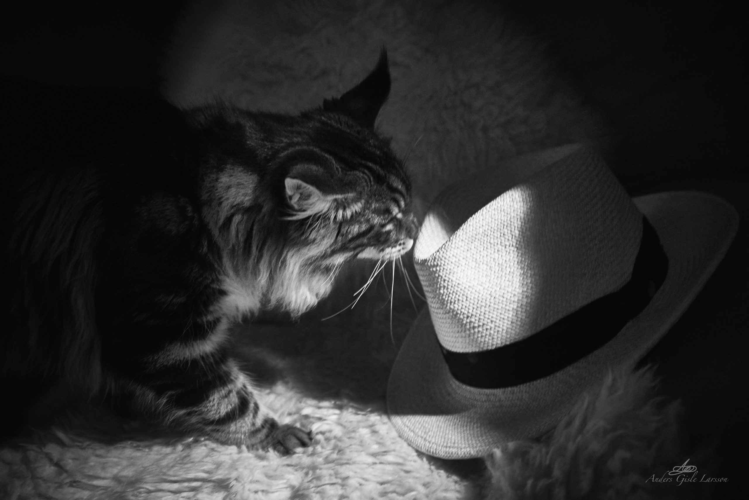 Wherever I Lay My Hat