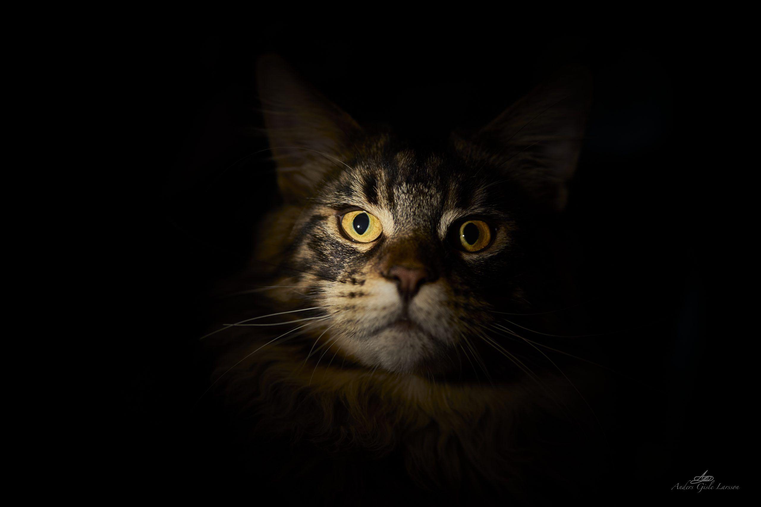 Monster Cat