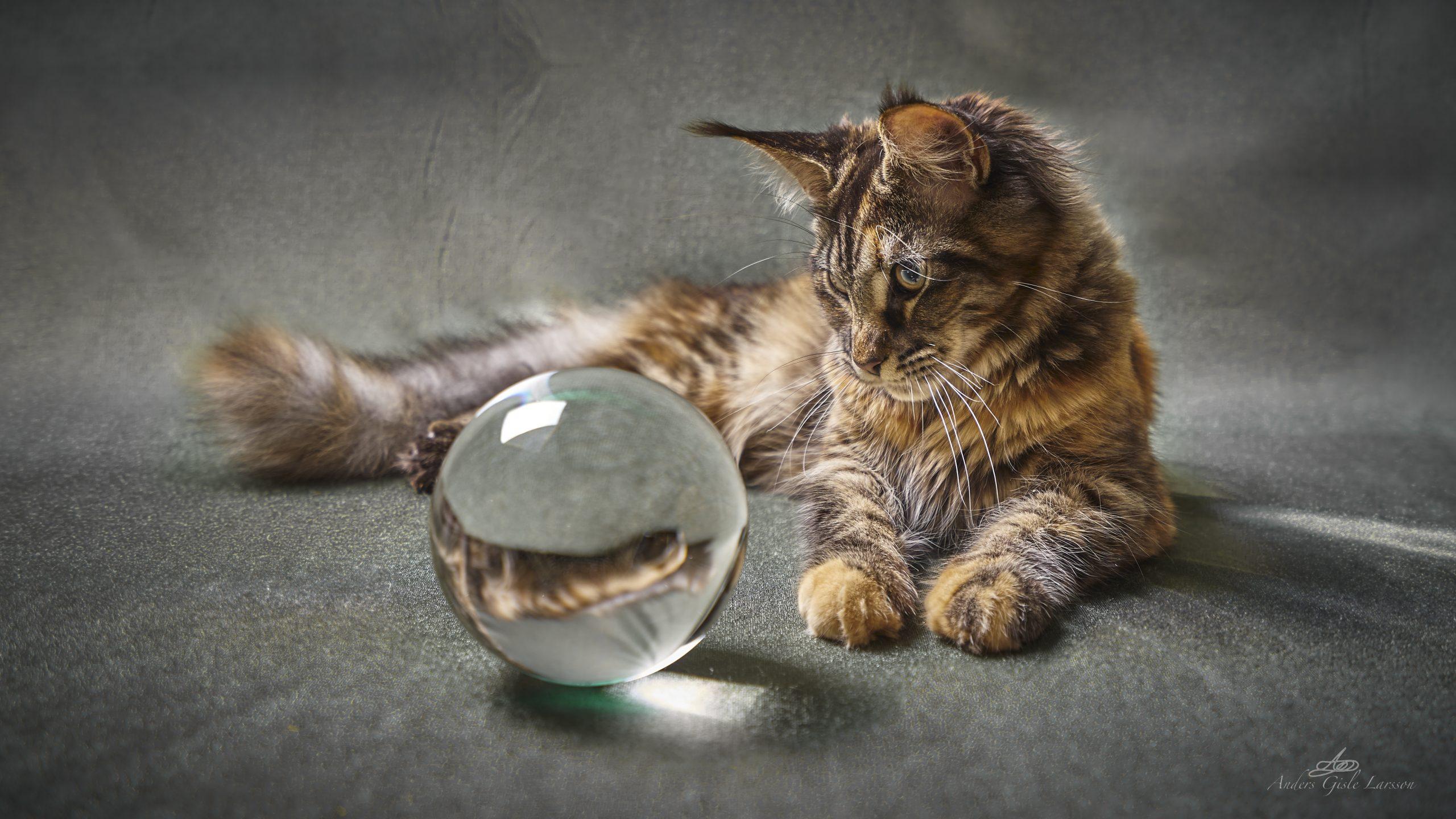 Katteøjne